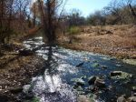 Sonoita Creek - immer wieder schön, Wasser zu sehen