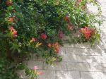 Herrliche Blütenpracht