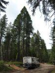 Unser Motorhome vor Sequoias