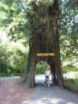 Tour Thru Tree bei Klamath