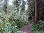 im Redwoodwald