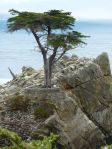 """The Lone Cypress"""