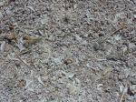 die Strände des Salton Lake
