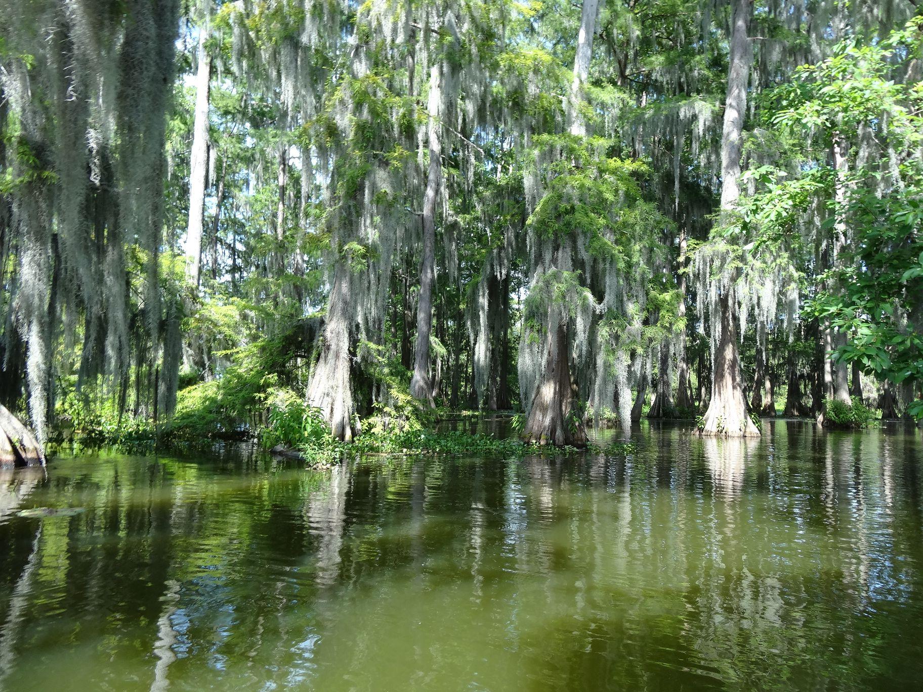New Iberia Swamp Tours