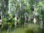 in Louisianas Sümpfen