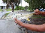 Jackfish ist ein guter Angelfisch