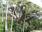 Dschungel auf Tobago