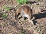 im Vogelpark Agadir