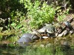Schildkrötenzug