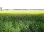 riesige Felder
