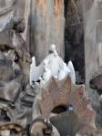 Pelikanfamilie an der Sagrada Familia