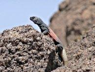 Petroglyphenpark, Arizona