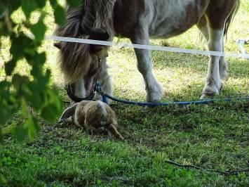 Pony und Kaninchen